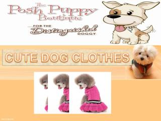 CUTE DOG CLOTHES.ppt